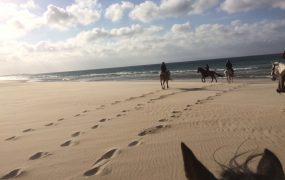 Reiten in Spanien Tarifa, ein toller Reitstall nahe dem Strand